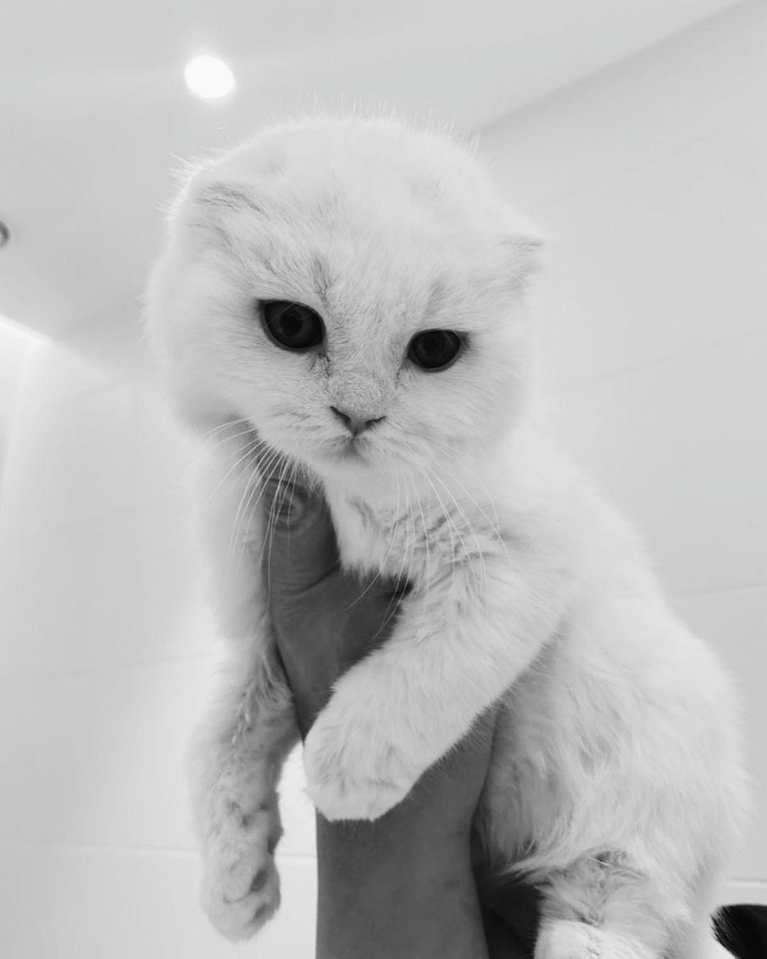 """""""Мой Наоки умер!"""": Айза Долматова готовит иск против заводчицы котов"""