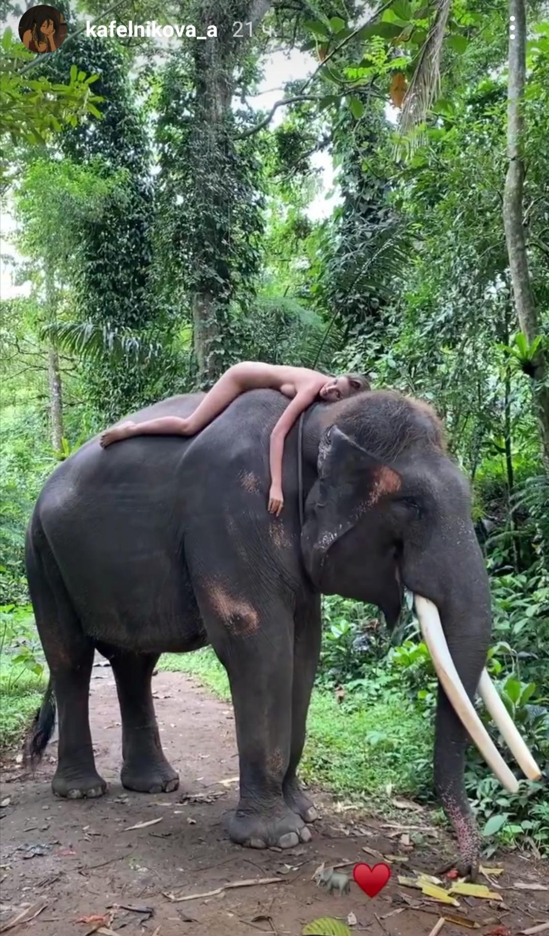 Голая Алеся Кафельникова прокатилась верхом на слоне